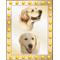 Star Dog