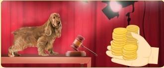 """The <a href=""""../labrador-retriever-dog-4/"""" title="""""""">Labrador Retriever</a> available to the highest bidder"""